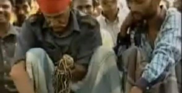 Indischer Fakir isst kleine Kobras