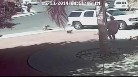 Katze rettet Baby das Leben vor einem Hund !