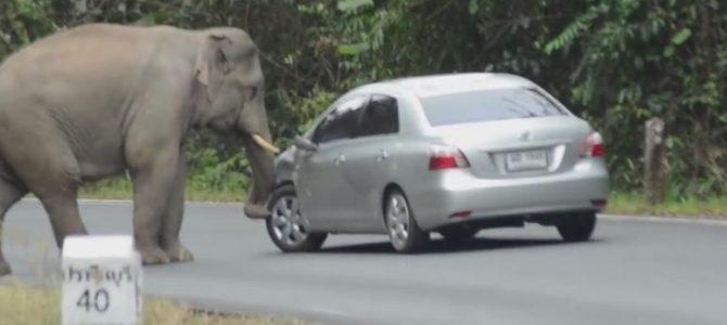 Elefant auf der Strasse !
